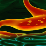 Magenvorteile von Aloe Vera