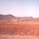 Aloe Vera Fuerteventura AbsolutAloe